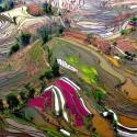thumbs rice fields china