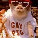 gay13