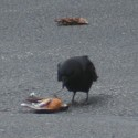 bird_carnage-3