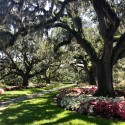 brookgreen-gardens-11