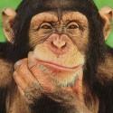 chimp_11.jpg