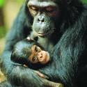 chimp_12.jpg