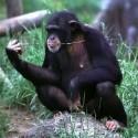 chimp_14.jpg