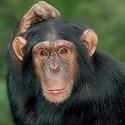 chimp_16.jpg