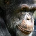 chimp_18.jpg