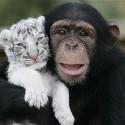 chimp_19.jpg