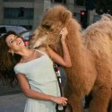 funny-camel-photo-08