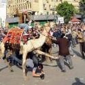 funny-camel-photo-09