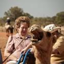 funny-camel-photo-10