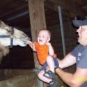 funny-camel-photo-11