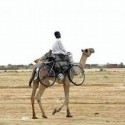 funny-camel-photo-13