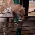 funny-camel-photo-15