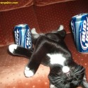 thumbs drunk pets 002