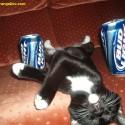 thumbs drunk pets 002