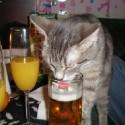 drunk-pets-003