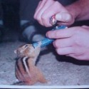 thumbs drunk pets 007