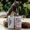drunk-pets-011