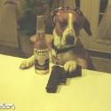 thumbs drunk pets 012