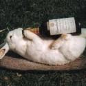 drunk-pets-013