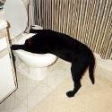 drunk-pets-016