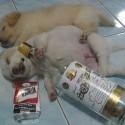 thumbs drunk pets 017