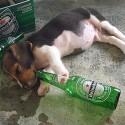 thumbs drunk pets 019