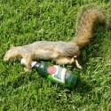 drunk-pets-020