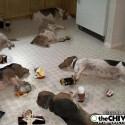 drunk-pets-023
