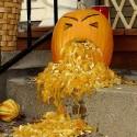 thumbs drunk pumpkin 05