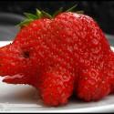 fruit-19