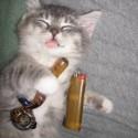 cannabis-funny-weed-pictures-hemp-humor-marijuana-weed-favim-com-442306