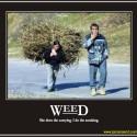 thumbs weed2