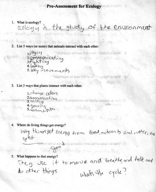 Stupid essay responses