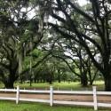 thumbs hopsewee plantation 9