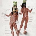 goofy-anatomy