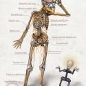 gyro-anatomy
