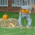 thumbs pumpkin photos 023