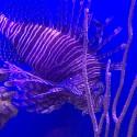 thumbs marine science center 3