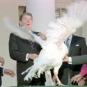 presidential-turkey-11