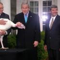 presidential-turkey-17