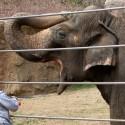 thumbs national zoo 02