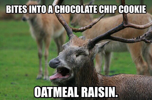 oatmeal cookie meme 04 oatmeal cookie memes
