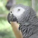 parrot_mountain-01