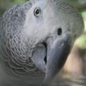 parrot_mountain-02