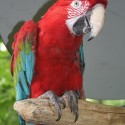 parrot_mountain-04