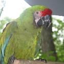 parrot_mountain-07