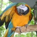 parrot_mountain-08