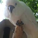 parrot_mountain-10