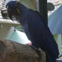 parrot_mountain-11