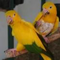parrot_mountain-12